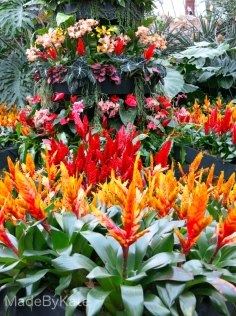 fiori_kew_gardens_london