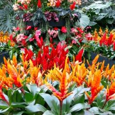 fiori_kew_gardens_london