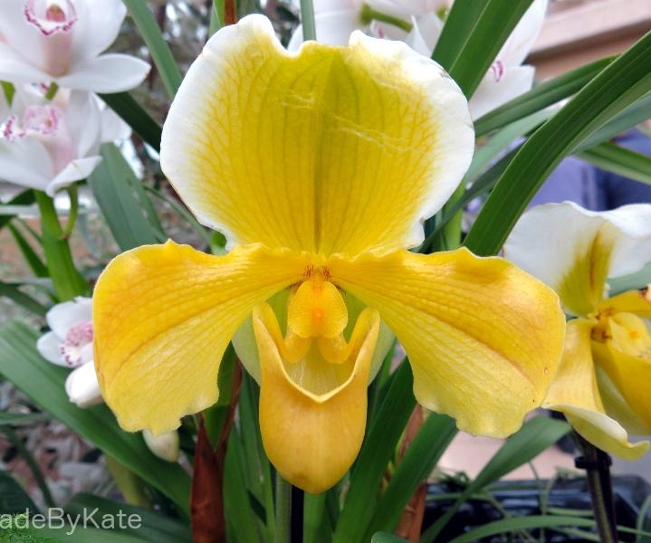 orchidea_kew_gardens