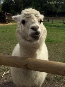 alpaca mudchute farm