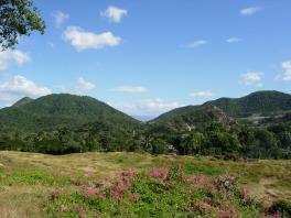 Bougainvillea_Cuba