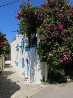 Bougainvillea_Greece